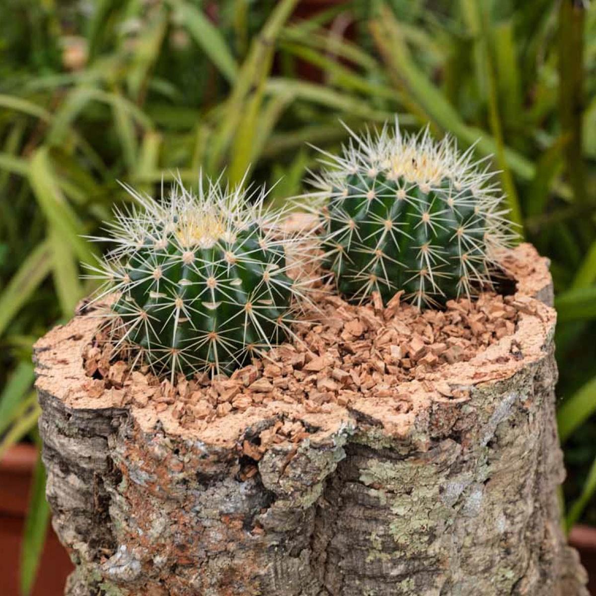 Vaso contenitore in corteccia di sughero Flower